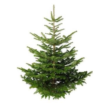Free Christmas Trees At Homebase Gratisfaction Uk