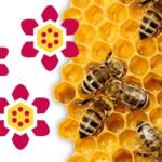 FREE Children's Honey Gummies MultiVitamins