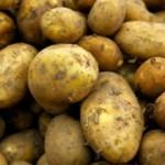 FREE Potato Growing Kit - Gratisfaction UK