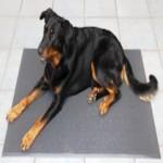 FREE Anti Bacterial Sanitized Pet Mat - Gratisfaction UK