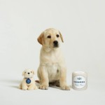 FREE Andrex Soft Toy - Gratisfaction UK