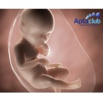Expert Pregnancy Advice From Aptaclub - Gratisfaction UK