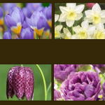 FREE Spring Flower Bulbs - Gratisfaction UK