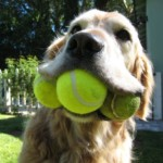 FREE Tennis Ball For Dogs - Gratisfaction UK