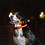 FREE LED Dog Collar - Gratisfaction UK
